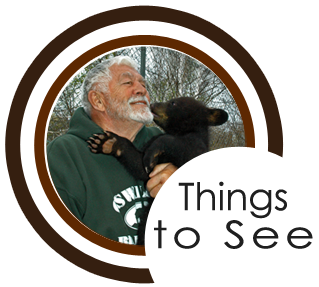 Newberry Michigan Attractions | Oswald's Bear Ranch, Toonerville Trolley, Tahquamenon Falls