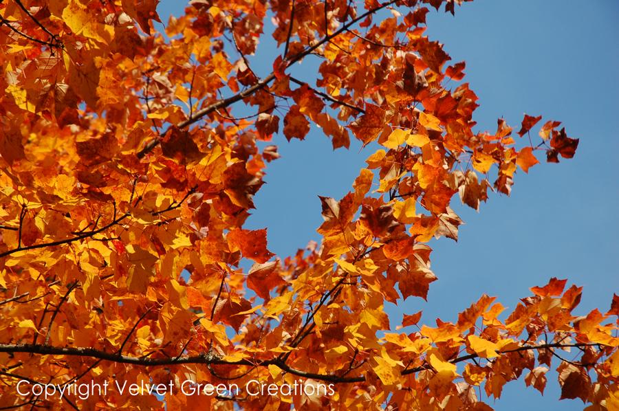 Fall in Newberry