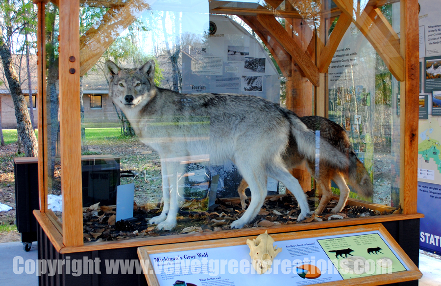 Wolves of Tahquamenon Country